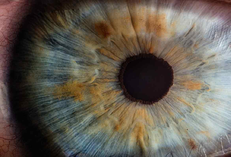 iris y pupila de ojo humano