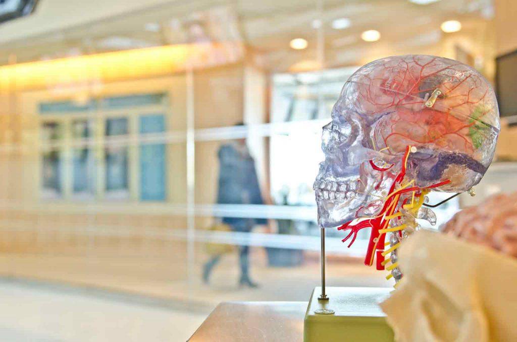 cerebro con craneo transparente